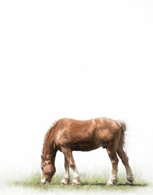 Belgian Draft Horse Photograph - Belgian Horse by David and Carol Kelly