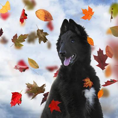 Belgian Sheepdog Photograph - Belgian Shepherd Puppy In Autumn 2 by Wolf Shadow  Photography