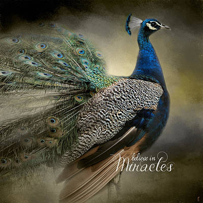 Peacock Photograph - Believe In Miracles - Peacock Art by Jai Johnson