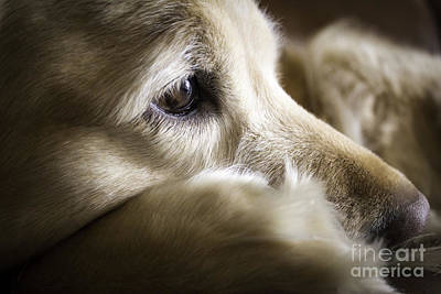 Soulful Eyes Photograph - My Bellina by Nancy Forehand