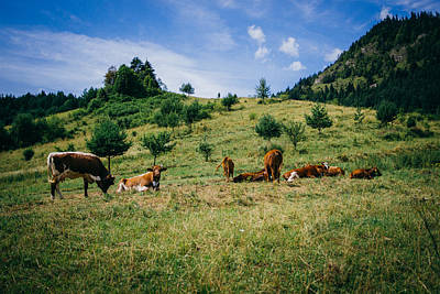 Mountains Photograph - Bells And Cows by Pati Photography