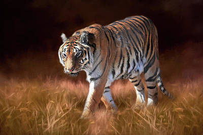 Tiger Photograph - Bengal On The Prowl by Donna Kennedy