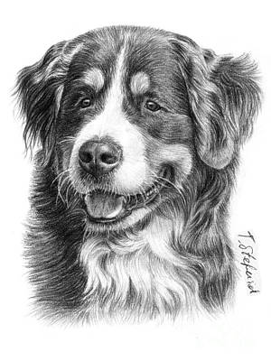 Dog Drawing - Bernese Mountain Dog by Tobiasz Stefaniak