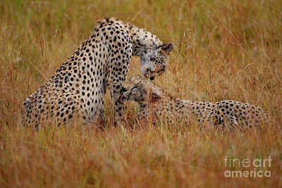 Cheetah Photograph - Best Of Friends by Stephen Smith
