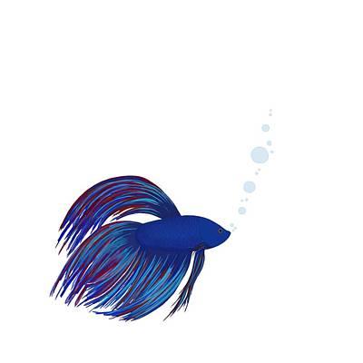 Betta Fish Print by Shara Lee