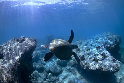 Sea Animals Photograph - Between Two Rocks by Sean Davey