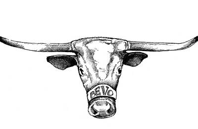 Austin Drawing - Bevo Headshot by Rebecca Barnes