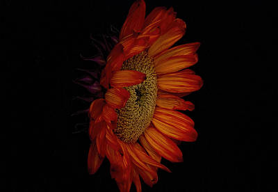 Sunflowers Photograph - Big Red by Dennis Reagan