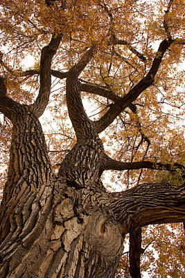 Fall Foliage Photograph - Big Tree by James BO  Insogna