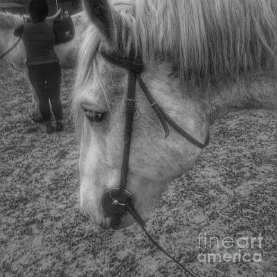 Horse Photograph - Billie After An Hours Riding.  #horses by Isabella Abbie Shores