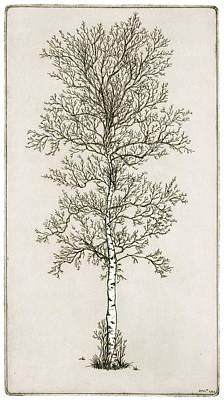 Birch Tree Print by Charles Harden