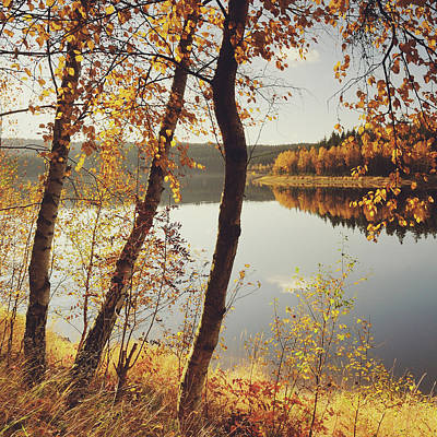 Birch Trees And Reflected Autumn Colors Print by Stefan Mendelsohn
