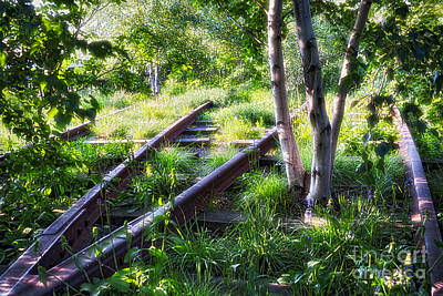 Birch Trees Of High Line Park Print by George Oze