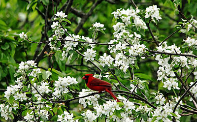 Wild Orchards Photograph - Bird And Blossoms by Debbie Oppermann