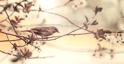 Bird And Sakura Print by Jenny Rainbow