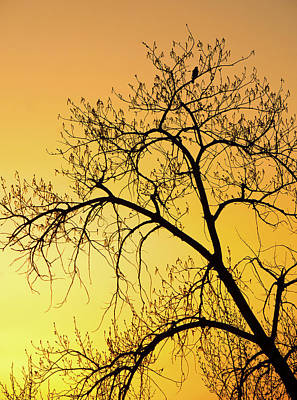 Bird At Sunset Print by James Steele