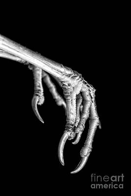 Talons Photograph - Bird Claw Black And White by Edward Fielding