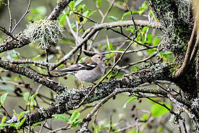 Starlings Digital Art - Bird In A Tree Posing by Toppart Sweden