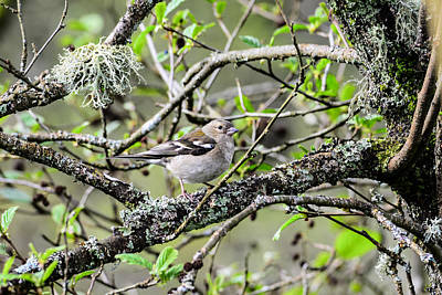 Dove Digital Art - Bird In A Tree Posing by Toppart Sweden