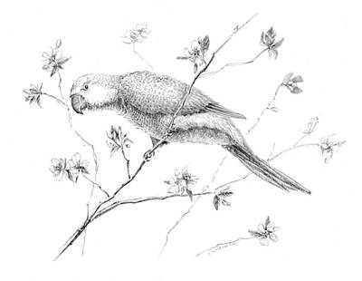 Bird In Flowering Tree Print by Crazy Cat Lady