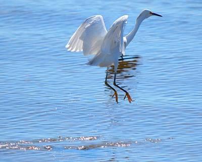 Scenic Photograph - Bird In Paradise by Patricia Twardzik