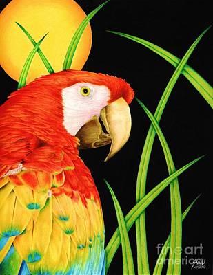 Macaw Drawing - Bird In Paradise by Sheryl Unwin
