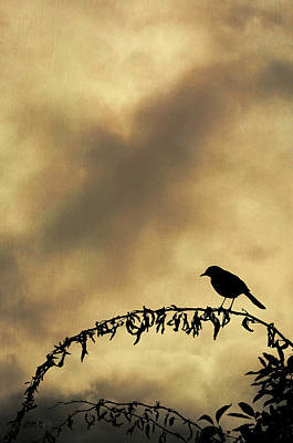 Bird On Branch Montage Print by Dave Gordon