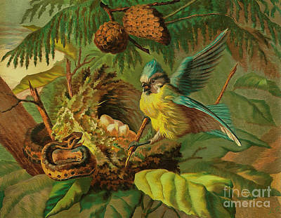Painting -  Bird Protects The Nest From A Snake by Sergey Lukashin