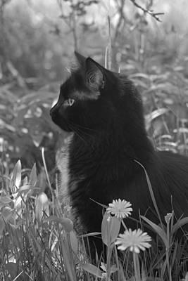 Photograph - Bird Watching by Karon Melillo DeVega