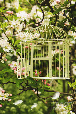 Bird Cages Photograph - Birdcage by Amanda Elwell