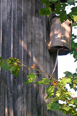 West Fork Photograph - Birdhouse With Snake Skin by Douglas Barnett
