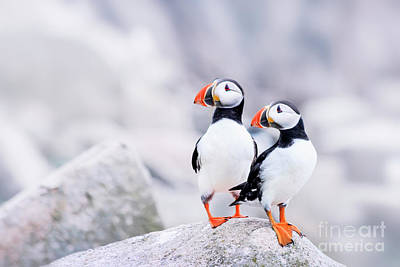 Puffin Photograph - Birdland by Evelina Kremsdorf