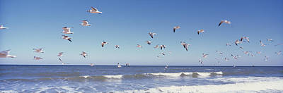 Birds Flying Over The Sea, Flagler Print by Panoramic Images