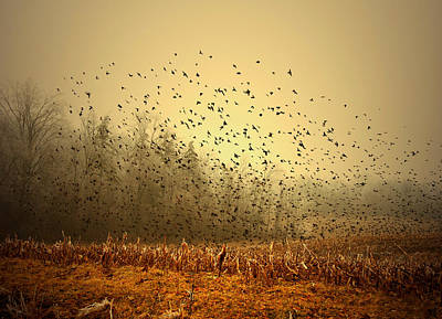 Indiana Landscapes Photograph - Birds by Mark Orr