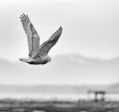 Tree Roots Photograph - Birds Of Bc - No.16 - Snowy Owl - Bubo Scandiacus by Paul W Sharpe Aka Wizard of Wonders