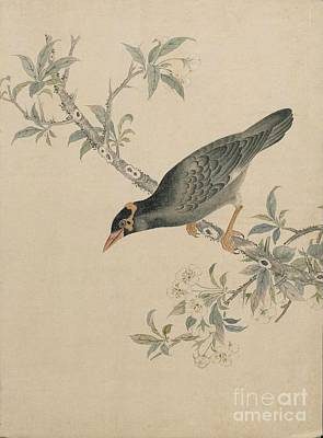Bald Eagle Painting - Birds Of Japan In The 19th Century by Celestial Images