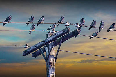Birds On A Wire Print by Randall Nyhof