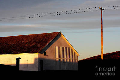 Birds On A Wire Print by Wingsdomain Art and Photography