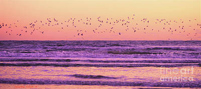 Photograph - Birds Over The Waves 10-23-16 by Julianne Felton