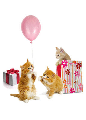 Adorable Digital Art - Birthday Kitties by Bob Nolin