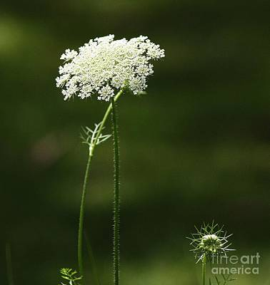 Photograph - Bishop's Lace by Marcia Lee Jones