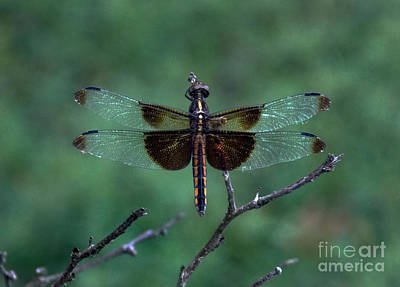 Flying Spider Photograph - Dragon Black And Glass by Skip Willits
