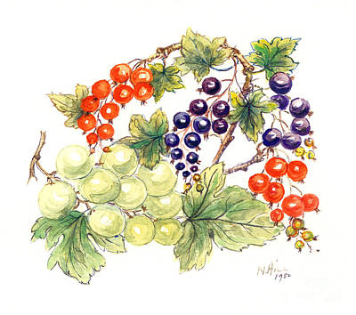 Grape Drawing - Black And Red Currants With Green Grapes by Nell Hill