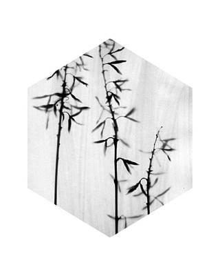 Pottery Barn Style Photograph - Black And White Botanical Hexagon - Hosta by Janine Aykens