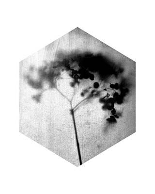 Pottery Barn Style Photograph - Black And White Botanical Hexagon - Hydrangea by Janine Aykens