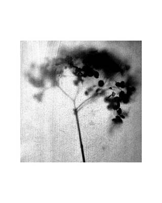 Pottery Barn Style Photograph - Black And White Botanical Photo - Square - Hydrangea by Janine Aykens