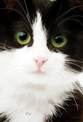 Domestic Short Hair Cat Painting - Black And White Cat  by William Mace