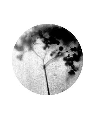 Pottery Barn Style Photograph - Black And White Circle - Minimalist Botanical Photo - Hydrangea by Janine Aykens