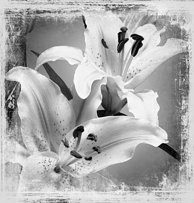 Balck Art Photograph - Black And White Grunge Lilies by Georgiana Romanovna