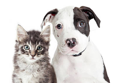 Black And White Puppy And Kitten Print by Susan Schmitz